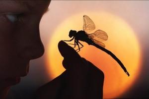 Dragonfly & Boy